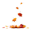 canvas print picture - Isolated Autumn Leaves