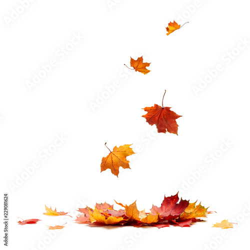 Isolated Autumn Leaves Wall mural