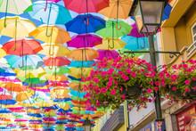 Umbrella Agueda  2