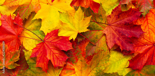 Bright red, orange and yellow Nature autumn background - 229088619