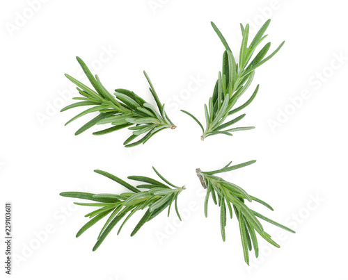 rosemary isolated on white background Fototapete