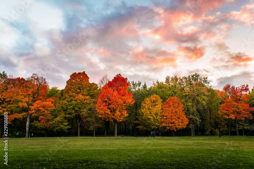 Poster Rose clair / pale Autumn Colors