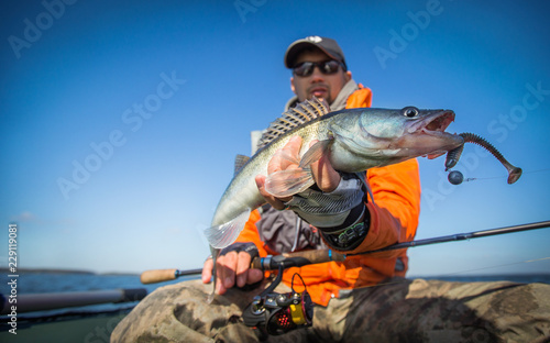 Fishing. Happy angler with zander fishing trophy.