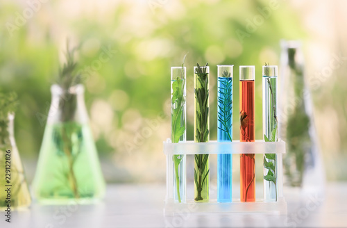 Poster Vegetal Test tubes with plants and liquids in holder on table