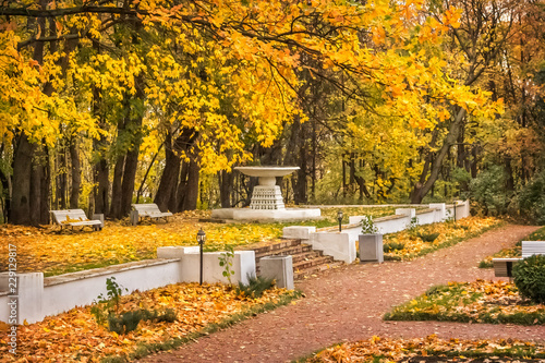 Photo В осеннем парке Yellow leaves  in the autumn park