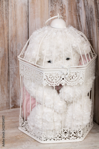 Fotografie, Obraz  Portraying animal abuse with a white teddy bear in a cage on wooden background