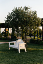 White Bench Under An Olive Tree In The Evening Light In Southern Italy.