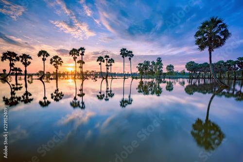 Sunrise on rice paddies during flood season.