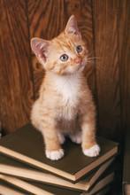 Cat Sitting On Wooden Bookshelf. Education Concepte