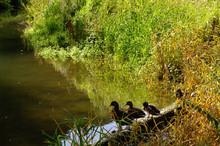 Vert Environnement Canard