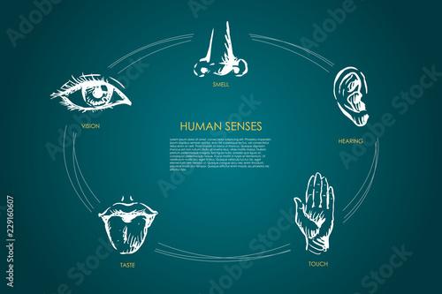 Leinwand Poster Human senses - vision, taste, touch, hearing, smell vector concept set
