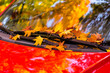 canvas print picture - a red car standing with maple autumn leaves on the window