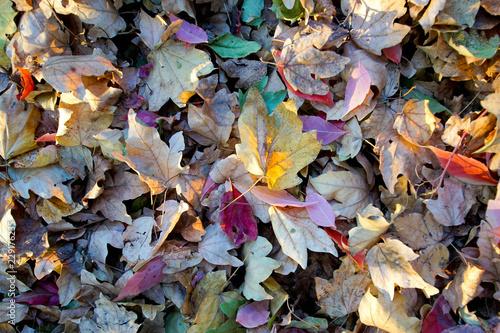 Photo  Bunte Blätter im Herbst