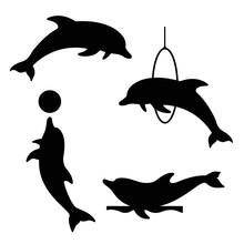 Dolphin Set 3