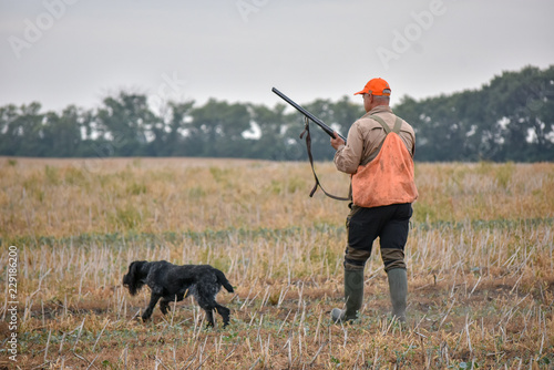 Poster Chasse A process of hunting during hunting season, process of quail hunting, hunter and drathaar, german wirehaired pointer dog.