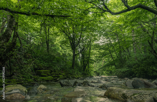 Printed kitchen splashbacks Forest river Great Smoky Mountains Expressway, Cherokee, North Carolina - June 19, 2018: River through the interior of a forest in Great Smoky Mountains