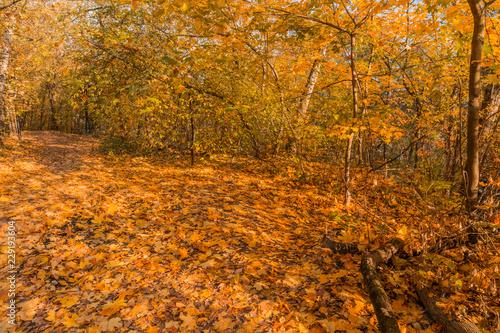 Stickers pour porte Orange eclat Autumn foliage in the park. October, Moscow