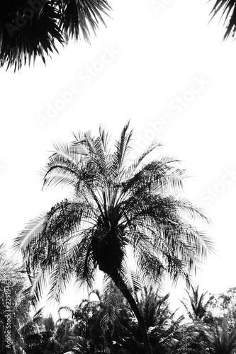 closeup palm tree - monochrome