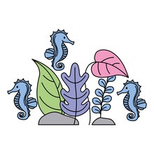 Aquarium Seahorses Plants On W...