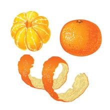 Set Of Whole Tangerine, Peeled Mandarin And Tangerine Skins