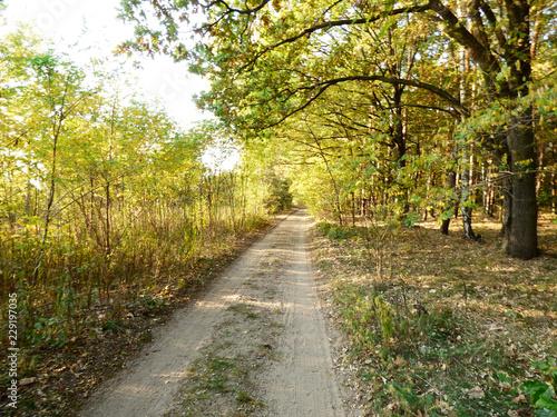 Poster Weg in bos Piękne kolory jesieni.