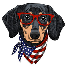 Vector Illustration Of A Funny Dachshund Dog Wearing Red Glasses And A Scarf In The Color Of The American Flag. Pop Art Poster For Independence Day Of America