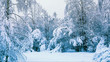 canvas print picture - Winter landscape. Snow-covered forest in the early morning after a heavy snow