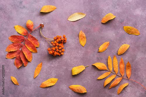 Rowan berries and leaves on a purple background Wallpaper Mural