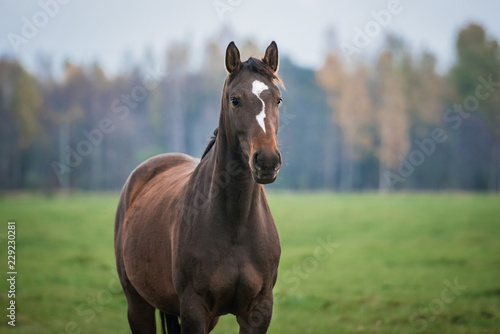 Portrait of a horse on the pasture in autumn