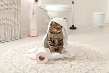 Cute Cat Playing With Roll Of ...