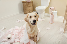 Cute Dog Playing With Toilet P...