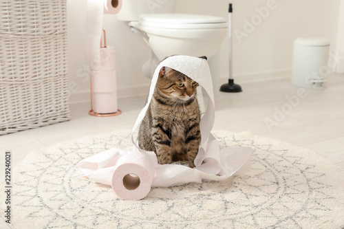 Cute cat playing with roll of toilet paper in bathroom