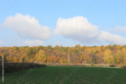 Spoed Foto op Canvas Blauwe hemel Autumn meadow is at the edge of the forest