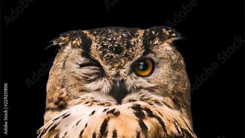 Photo sur Toile Chouette The horned owl with one open eye. Isolated on a black background.
