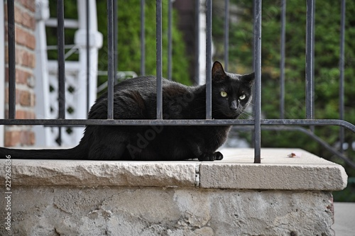 Fotografie, Obraz  A black cat hangs out on a residential stoop