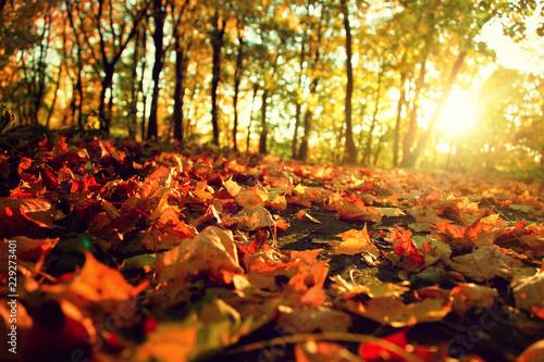 Fototapeta Goldener Herbst obraz na płótnie