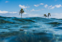 A Secluded Island With Palm Tr...