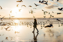 Woman Walking At The Beach Full Of Seagulls At Sunset, Winter, Portugal