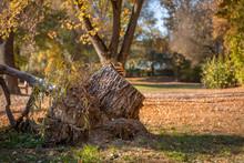 Herbstlandschaft Baumstumpf