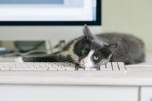 Cute Grey Cat Lying On Keyboard