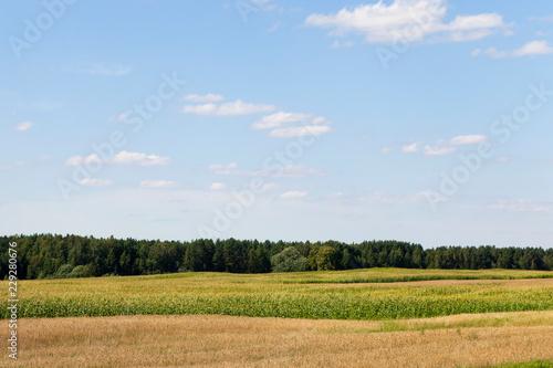 field corn landscape