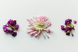 Close up of deconstructed flowers