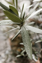 Close Up Of Rain Drops On Plant In Prague Cafe