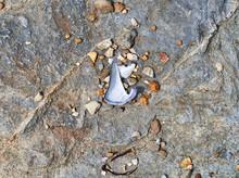 Top View Of A Broken Mussel Sh...