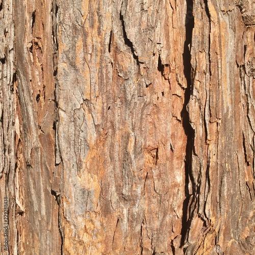 Canvas Prints Textures bark of tree texture