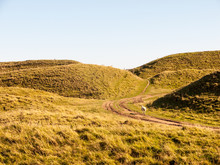 Maiden Castle Iron Age Old Fortress Landscape Nature Grassland Animals Space Beauty Natural