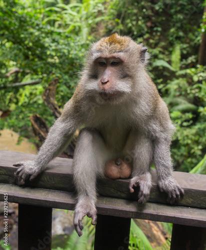 Foto op Plexiglas Aap Monkey on the tree ,Monkey Climbing Tree