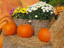 Orange Pumpkins, Chrysanthemum Flowers On Bale Of Hay