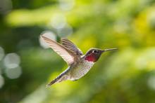 Hummingbird Fly By