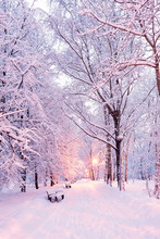 Winter Park Before Dawn In The Light Of A Lantern. Snow Shops And Paths. Trees In The Snow